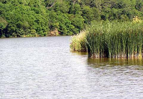 Ungarn angeln fischen for Teich mit fischen